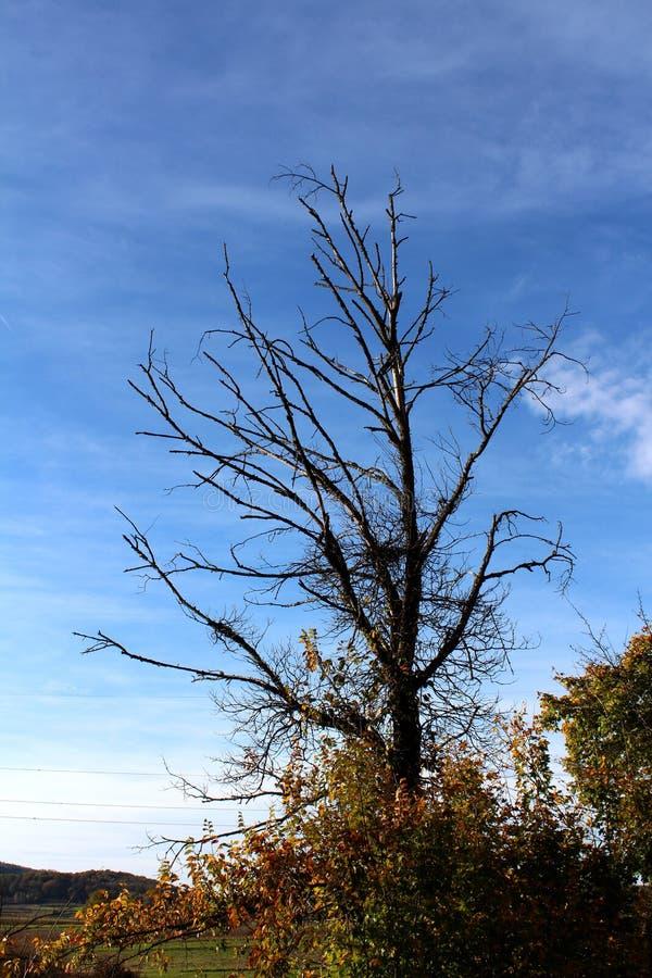 Высушенное старое дерево за свежей новой вегетацией стоковое фото rf