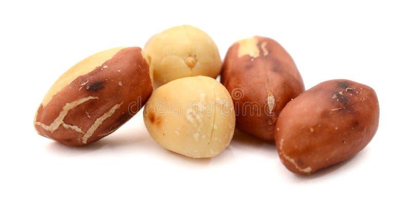 Высушенные арахисы в крупном плане на белой предпосылке стоковое фото rf