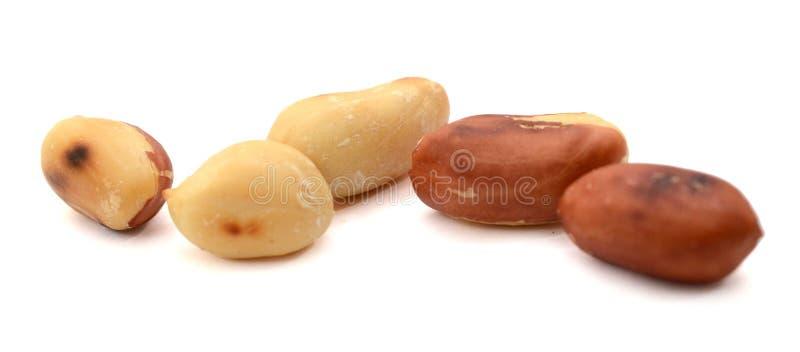Высушенные арахисы в крупном плане на белой предпосылке стоковая фотография