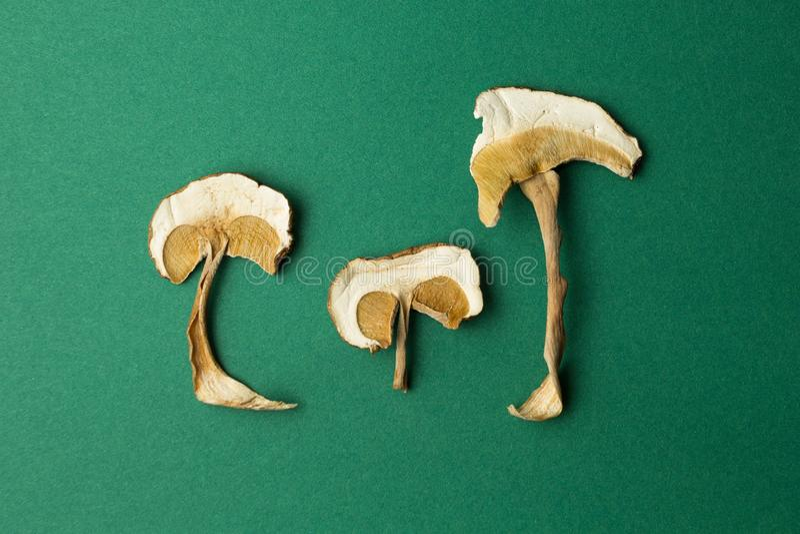 Высушенные грибы изолированные на зеленой предпосылке Галлюциногенные грубы стоковые изображения rf