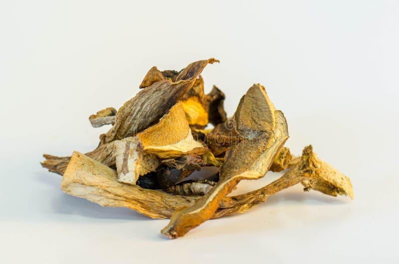 высушенные грибы одичалые стоковая фотография rf