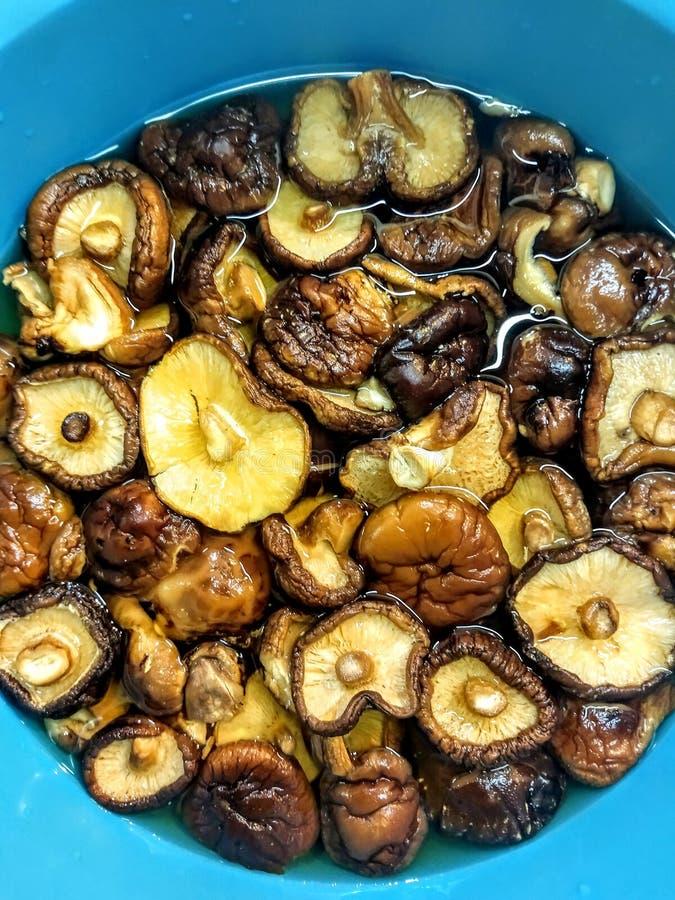 Высушенные грибы шиитаке выдерживают в воде стоковые фото
