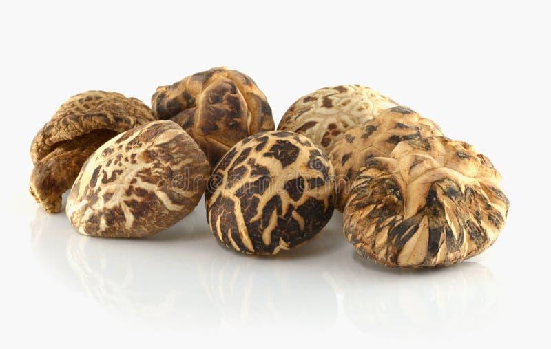 Высушенные грибы шиитаке на белой предпосылке стоковые изображения
