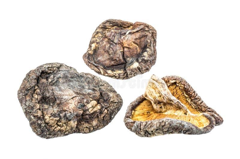 высушенные грибы стоковая фотография