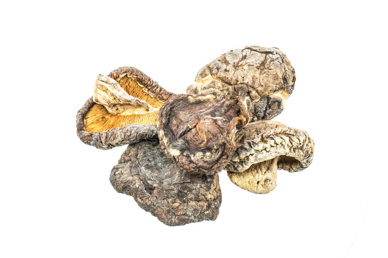 высушенные грибы стоковое изображение