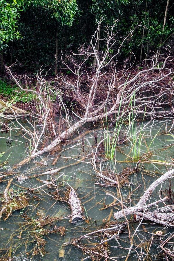 Высушенные деревья падают в канал стоковая фотография rf