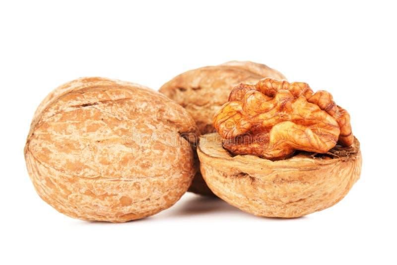 Высушенные изолированные грецкие орехи стоковая фотография rf
