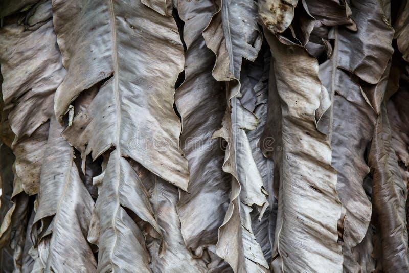 Высушенные листья банана стоковая фотография