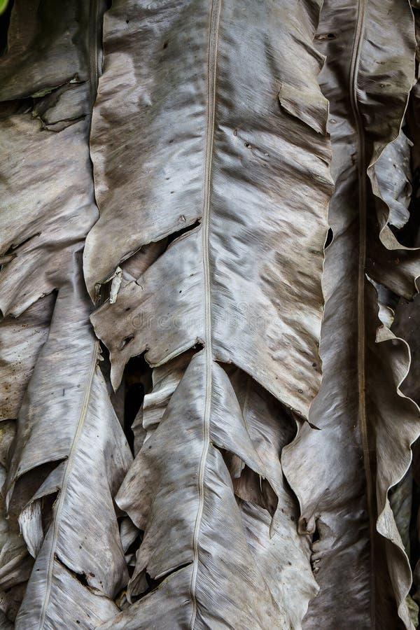 Высушенные листья банана стоковое изображение rf