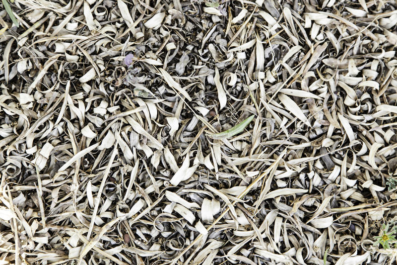 высушенные листья прованские стоковая фотография
