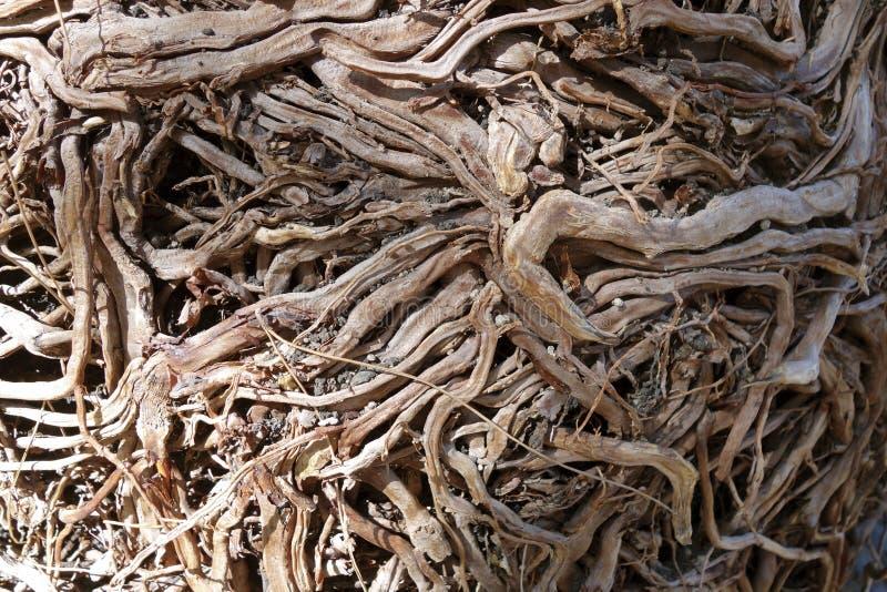 Высушенные корни дерева стоковое изображение
