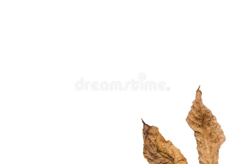 Высушенные листья на белой ioslated предпосылке, стоковые фото
