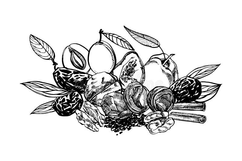 Высушенные персики и черносливы, сливы вручают вычерченную иллюстрацию Эскиз чернил гаек иллюстратор иллюстрации руки чертежа угл бесплатная иллюстрация