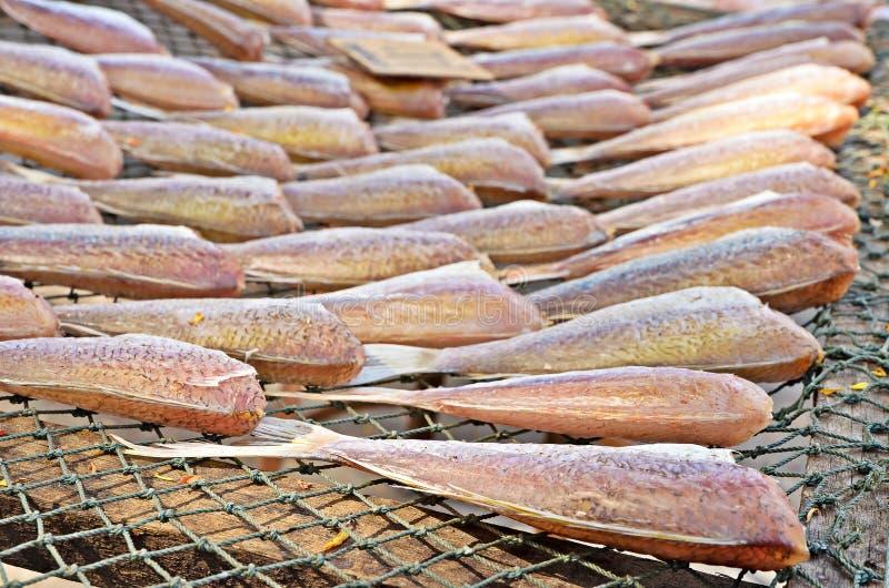 Высушенные рыбы на сети бросания стоковые фотографии rf