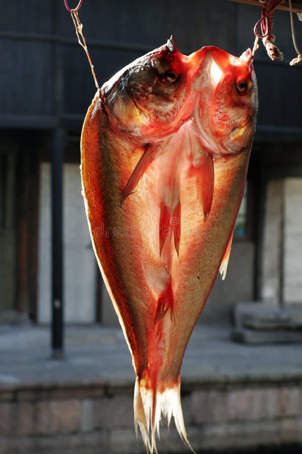 высушенные рыбы стоковые фото