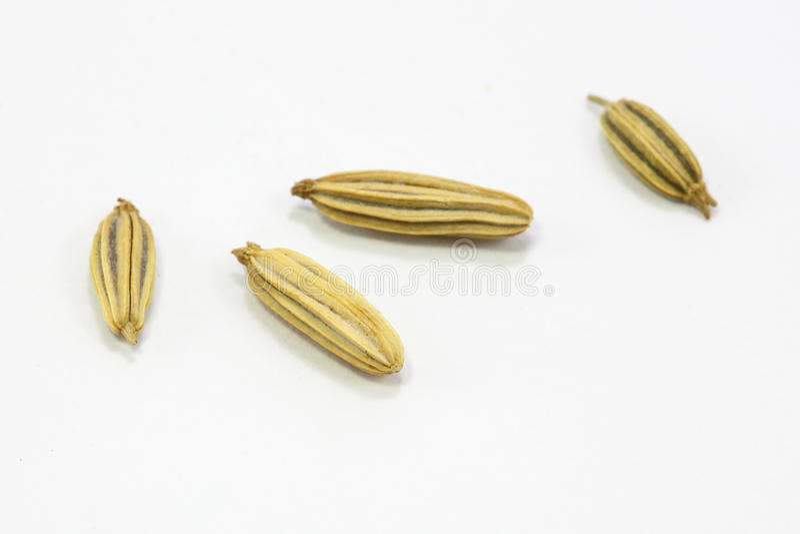 Высушенные семена тимона стоковые фотографии rf