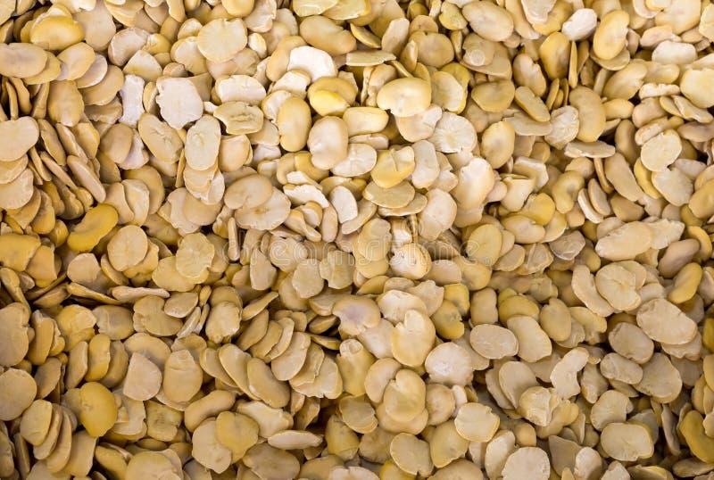 Высушенные фасоли fava, предпосылка стоковые фотографии rf