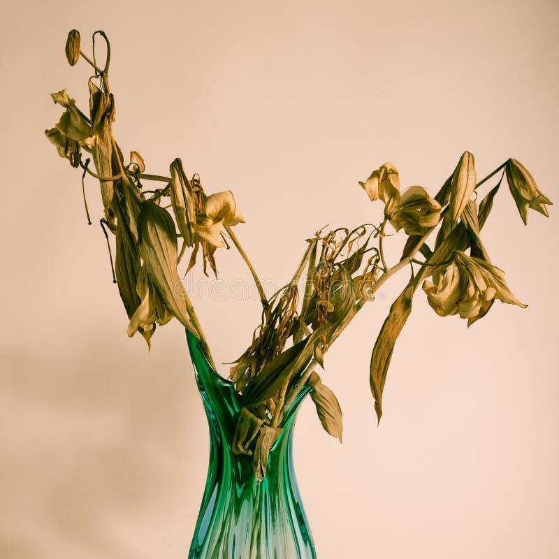 Высушенные цветки в вазе стоковые изображения rf