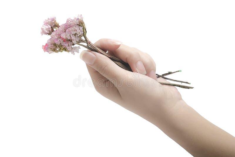 Высушенные цветки и руки стоковое фото rf