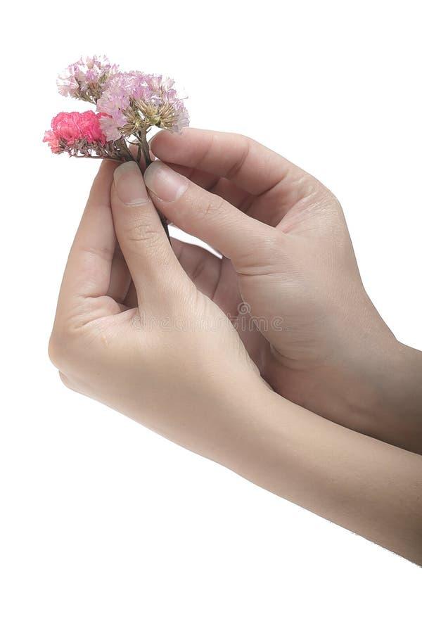 Высушенные цветки и руки стоковые фото