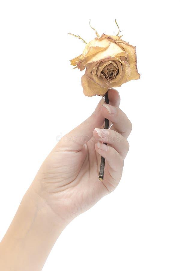 Высушенные цветки и руки стоковое фото