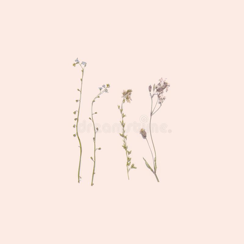 Высушенные цветки лета на розовой предпосылке стоковое изображение rf