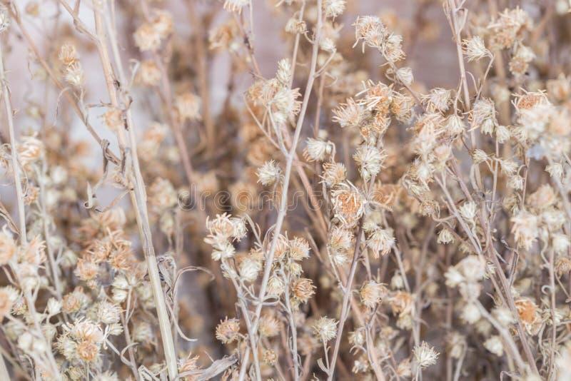Высушенные цветки стоковое фото