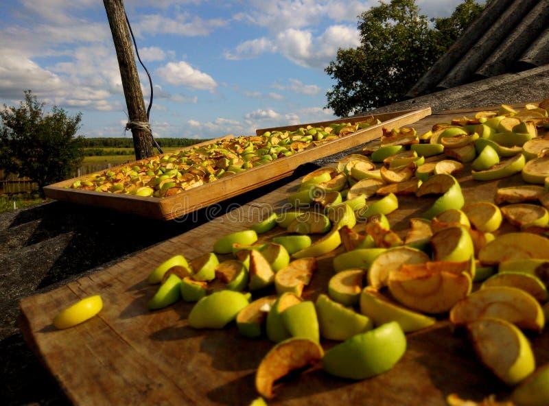 высушенные яблоки стоковое фото