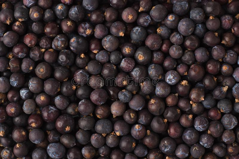 Высушенные ягоды можжевельника spice как предпосылка, естественный приправляя t стоковая фотография rf