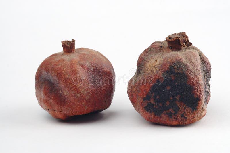 высушенные pomegranates стоковая фотография rf