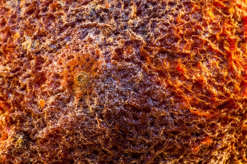 Высушенный апельсин, стоковые изображения rf