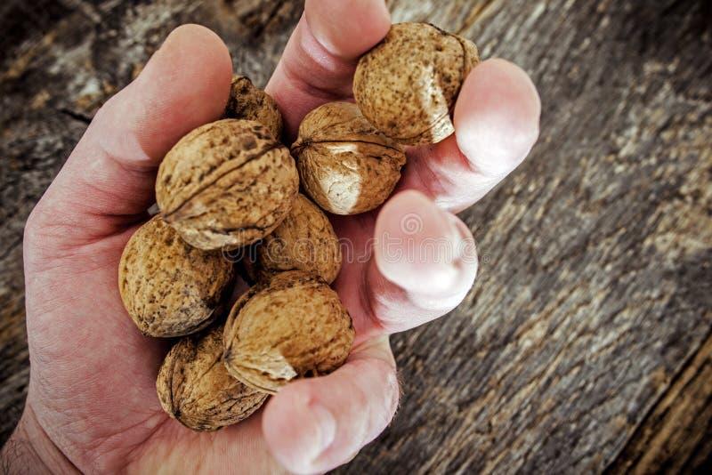 Высушенный грецкий орех в руке фермера стоковое фото