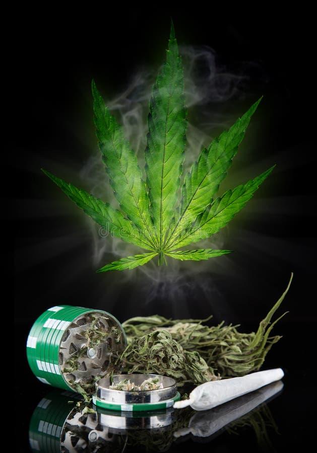 Конопля высушенный лист медведи марихуана и 38 дублей