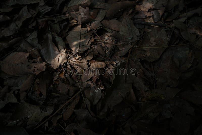 Высушенный коричневым цветом первый этаж разрешения стоковое фото rf