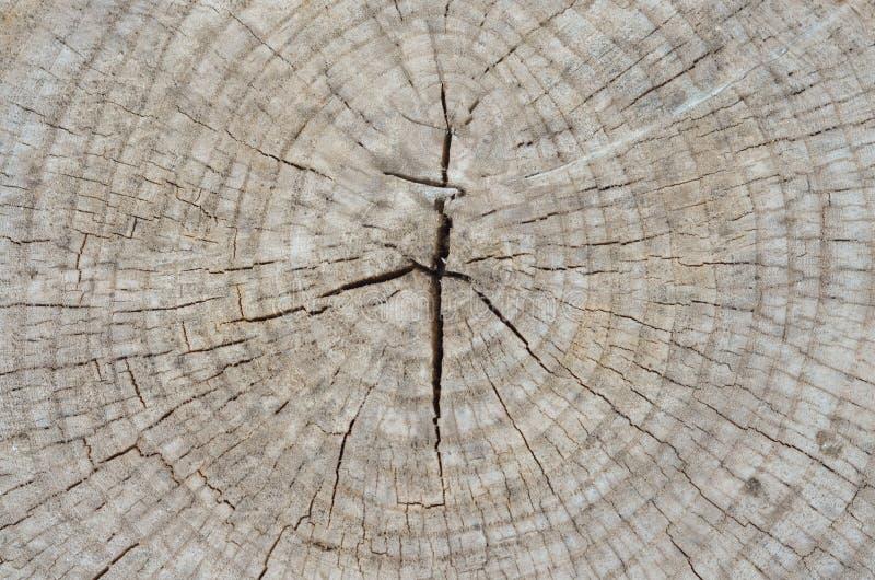 Высушенный отрезок ствол дерева к старой поверхности пня стоковые изображения