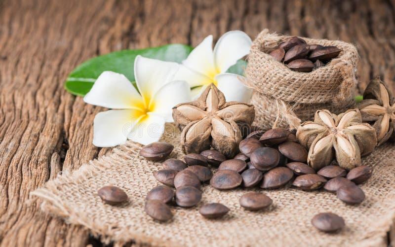 Высушенный плодоовощ семян капсулы арахиса sacha-Inchi стоковое изображение