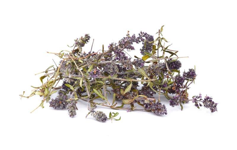 Высушенный чай тимиана на белой предпосылке Цветки тимиана в природе Тимиан обыкновенно использован в кулинарии и в фитотерапии стоковое изображение