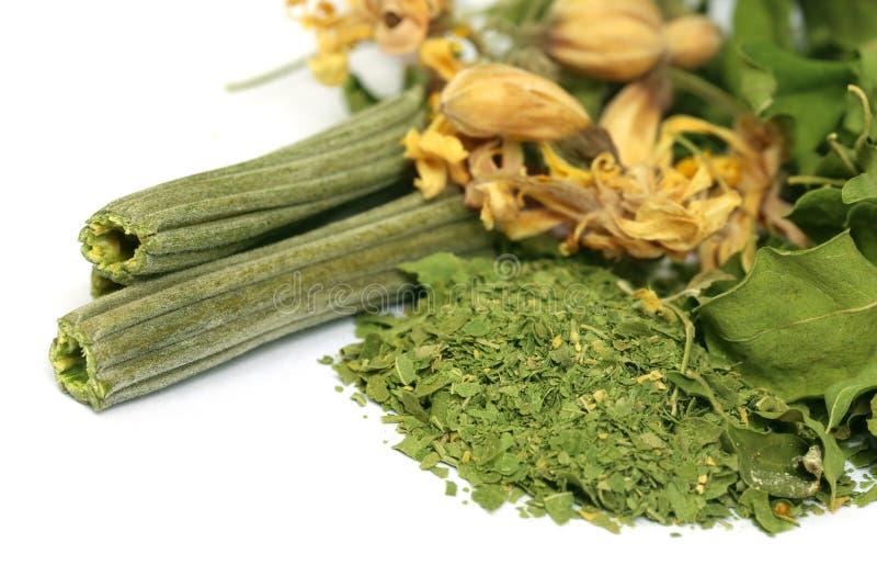 Высушенный moringa с листьями и цветком стоковое фото rf