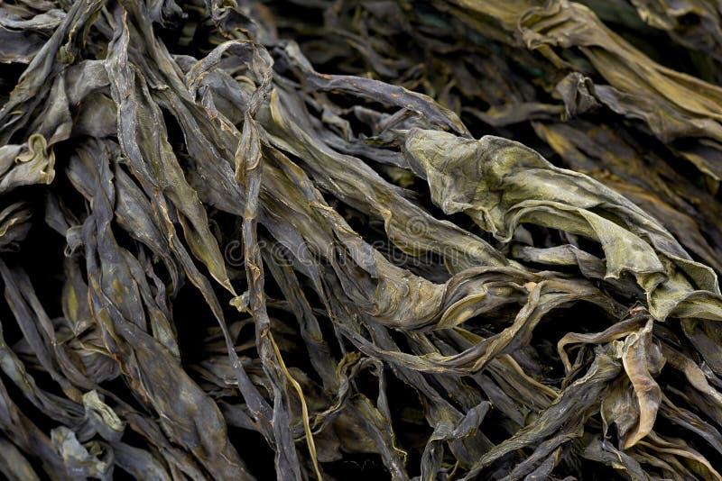 высушенный seaweed стоковая фотография rf