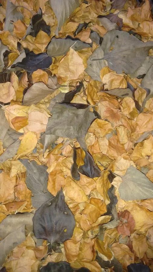 Высушите листья стоковое фото rf