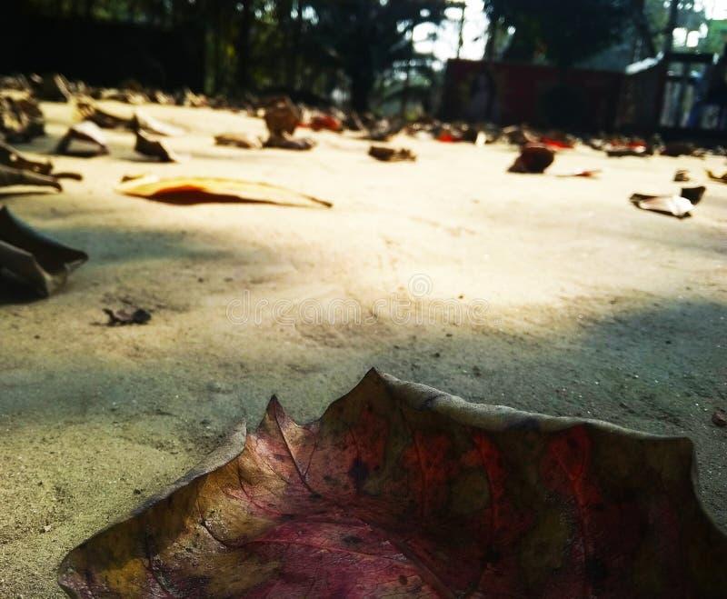 Высушите распылять листьев стоковое фото rf