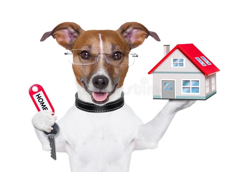 Самонаведите предприниматель собаки стоковые изображения rf