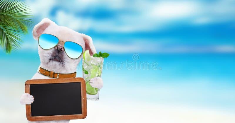 Выследите нося солнечные очки ослабляя в предпосылке моря Собака держит пустое классн классный стоковое изображение