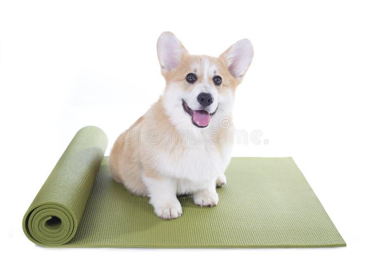 Выследите сидеть на циновке йоги, концентрируя для тренировки стоковые изображения rf