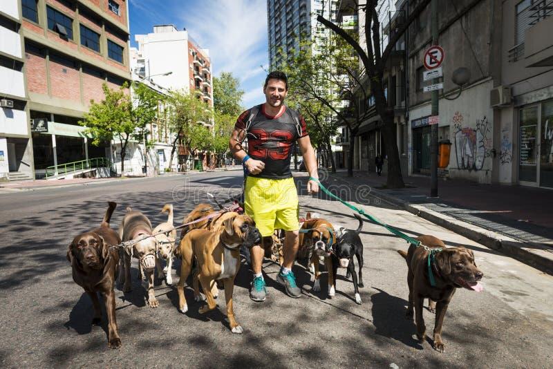 Выследите ходока Pasea Peros с пакетом собак в улице района Сан Telmo в городе Буэноса-Айрес, Аргентины стоковые фото