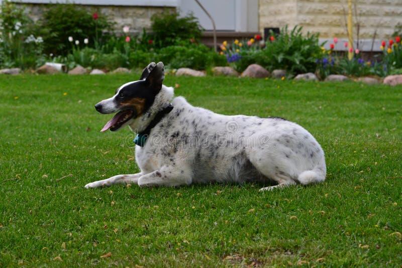 Выследите lounging на сочной зеленой траве на весенний день стоковые изображения