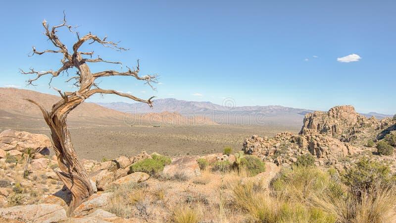 Выхват дерева, след пика Teutonia, заповедник Мохаве национальный, CA стоковые фото
