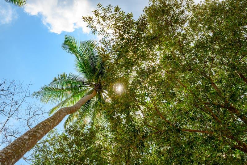 Выходить сквозь отверстие Солнца выходит ладони кокоса и над деревьями в Таиланд стоковая фотография rf