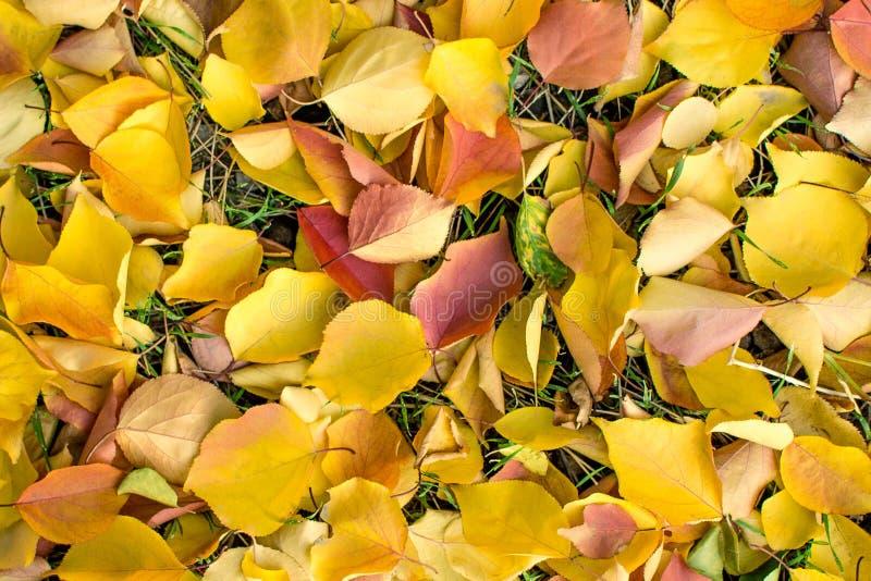 Выходит желтая абстракция текстуры предпосылки стоковая фотография