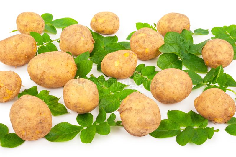 выходит желтый цвет картошек стоковые фото
